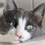 Страдают ли кошки от одиночества?