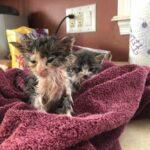 Девушка несла домой уличного котенка, а позади нее раздались шаги - это бежала кошечка, в надежде, что ее тоже возьмут с собой