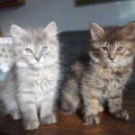 Две маленькие очаровательные кошечки были спасены и отправлены в приют - они не могут жить друг без друга и все делают вместе