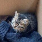 На улице шел сильный доджь и маленький котенок пробрался в квартиру к девушке - он решил остаться там навсегда