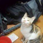 Уличная кошка пробралась в раздевалку к хоккеистам и оставила в сумке одного из них милый сюрприз