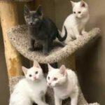 Женщина пришла в приют за двумя котятами, но вместо этого забрала трех - все потому что они были неразлучными дружными братьями