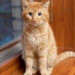 Одноглазый кот Пират ходил и заглядывал по окнам, в надежде обрести дом - однажды ему повезло и он встретил доброго человека
