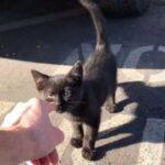 «Гризли – самое прекрасное, что есть в моей жизни» - слова мужчины, который нашел плачущего кота в свой обеденный перерыв