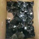 Женщина принесла к приюту большую коробку с котятами и удивила всех сотрудников - там сидело 39 малышей