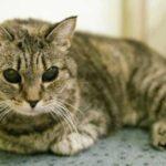 Незрячая кошка прожила в приюте целых четыре года - но, в конце концов, она все же обрела дом и любящую хозяйку