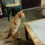 На улице нашли котика с необычайно короткими передними лапами - больше всего он похож на кенгуру