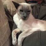 Старый 17-ти летний кот страдал от артрита и постоянно требовал ласки - хозяйка придумала оригинальный способ помочь ему
