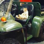 Наглый рыжий кот пришел в пожарную часть, забрался в машину и улегся спать - так он стал любимчиком пожарных и их талисманом