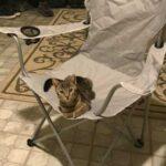 """""""Пушистый приятель сам выбрал меня..."""" - мужчина вернулся домой и обнаружил в кресле кота, но у него никогда не было питомца"""