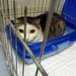Хозяева принесли кота в приют и оставили его там, хотя он прожил с ними несколько лет - они просто не хотели с ним возиться