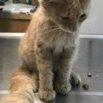 Маленький уличный котенок помог мужчине пережить расставание с любимой девушкой - он ворвался в дом и остался там жить