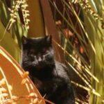 Котик решил забраться на пальму - на ней его застигла разбушевавшаяся погода и он просидел там 6 дней