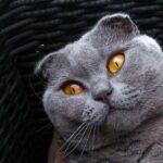 Котов много не бывает или как у нас появилась третья кошка