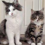 Хозяева нашли кота, пропавшего год назад, но он стал вдвое больше прежнего - оказалось, кот прожил этот год на фабрике кормов