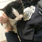 Офицер полиции приехала на вызов, чтобы забрать кошку и отвезти ее в приют - вместо этого кошка отправилось к домой к офицеру