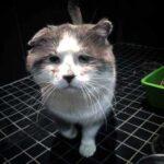 Кот прожил на улице 6 долгих лет, покрылся шрамами, а его глаза наполнились грустью и тоской от суровой бездомной жизни