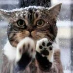 Кошка пришла к кафе, стала царапать окна и мяукать - так она позвала людей на помощь и отвела их к коробке в лесу
