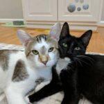 История кошачьей пары, которую судьба заставила расстаться, а потом воссоединила вновь - как раз к рождению их малышей