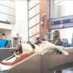 Самый приятный контролер, которого мы знаем - в Израиле бездомная кошка облюбовала турникет и проверяет билетики