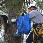 Пенсионер из США открыл свое дело по спасению котиков с деревьев и снял оттуда несколько сотен питомцев - он работает бесплатно