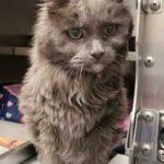 Старый 20-ти летний кот оказался никому не нужным из-за развода своих прежних хозяев - никто не верил, что он вновь обретет дом