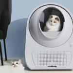 Самоочищающийся туалет для кошек: 7 популярных моделей