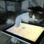 Что вышло из идеи подарить котикам из приюта планшеты для игр