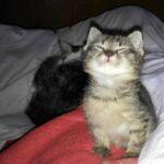Улыбнитесь кошке… глазами. Так вы её успокоите и выразите симпатию