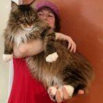 Кот обиделся, что хозяин оставляет его на ночь одного и решил ночевать у соседа - с тех пор у него два хозяина