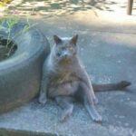 Девушке потребовалось больше года, чтобы завоевать доверие кота, которого прежние хозяева бросили при переезде