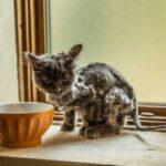 Парень с сыном нашли очень тощего кота и решили помочь ему - теперь питомец стал настоящим красавцем и живет с ними вместе