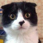 Можно ли мыть волосы кошачьим шампунем от блох? Расскажу о своём опыте