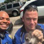 Два котенка решили обосноваться под капотом автомобиля - на помощь им отправили офицеров полиции