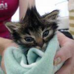 Хрупкий котенок привел волонтеров на старую ферму, в которой жили 60 котов - очень вовремя, ведь ферму собирались сносить