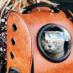 Рюкзак для кошек: в чем преимущества и как выбрать?
