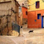 """""""Ми-ми-ми"""", """"чи-чи-чи"""" и другие забавные обращения к кошкам в разных странах мира"""