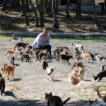 Как живет тысяча обитателей кошачьего городка - уникального города, построенного специально для кошек. В чем отличие от приюта?