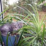 Вредные и полезные комнатные растения для кошек