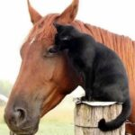 Бездомный уличный котенок пришел на ферму - он обрел там не только дом и хозяйку, но и завялаз удивительную дружбу