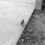 К скейтбордисту подбежала кошечка, стала мяукать и заглядывать в глаза - парень взял ее и теперь они вместе катаются на доске