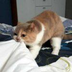 Моя кошка просыпается слишком рано - что мне делать?