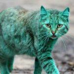 На улицах города был обнаружен кот с необыным окрасом - в чем причина зеленого оттенка его шерсти