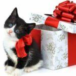 Кошка - хороший подарок? Ответ не так очевиден