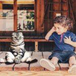 30 вещей которые мы говорим кошкам... и детям!