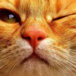 Почему кошки редко моргают?