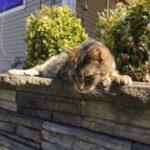 Хозяйский кот любил залезать в открытые окна припаркованных автомобилей - однажды эта привычка его подвела и он потерялся