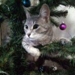 Не буду наряжать ёлку из-за кота. Или Как безопасно для кошек украсить ёлку к Новому году