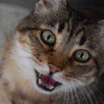 Почему кошки мяукают?