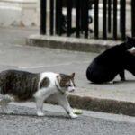 За что кота, штатного работника британского Министерства иностранных дел, чуть было не уволили с работы